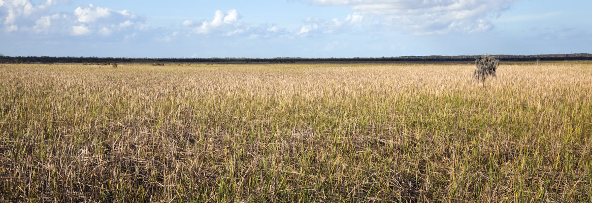 Louisiana Marsh